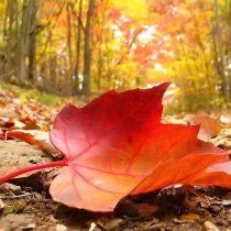 Autunno: non cadono solo le foglie…