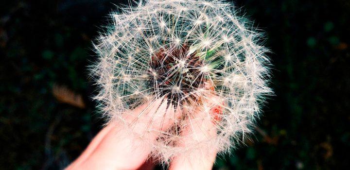Prevenire e alleviare le allergie